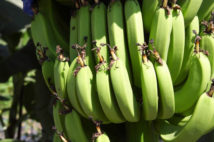 Против организаторов «бананового» ICO в России возбудили уголовное дело