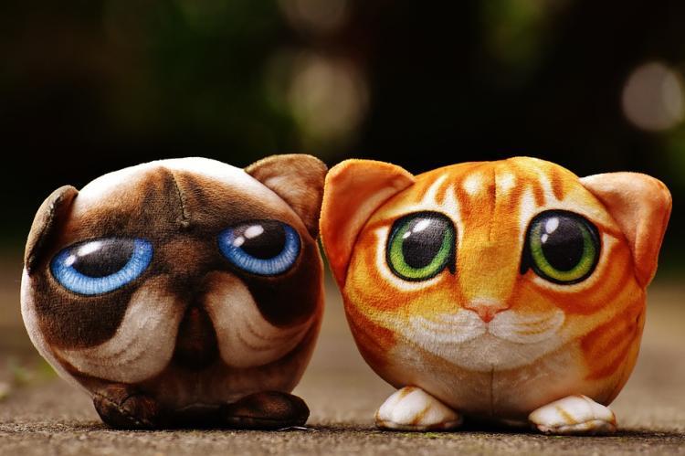 Цифровые котята привлекли 12 млн долларов финансирования
