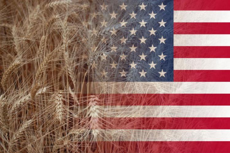 Россия сообщила о рекордной площади посева пшеницы, цены на американское зерно