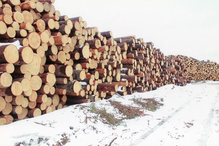 Глава компании Абрамовича и партнеров предложил приватизировать лес