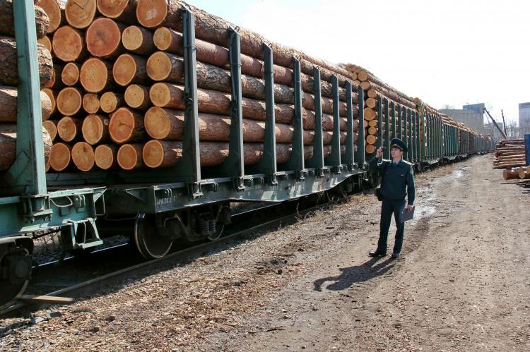 Sohu: В ответ на вырубку леса Россия нанесла жесткий удар по Китаю