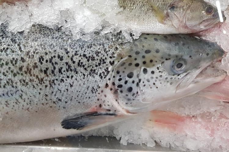 Замороженный лосось