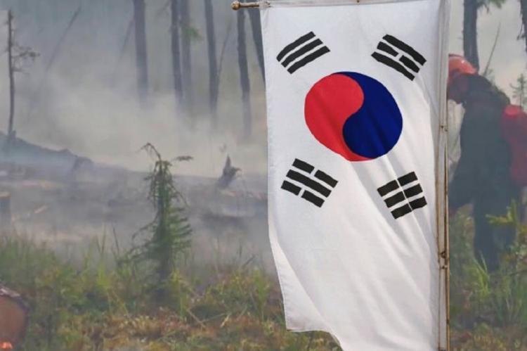 Россия хочет продать сгоревший лес в Якутии Южной Корее