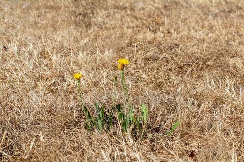 Ущерб от засухи в ФРГ превысил 1 млрд евро