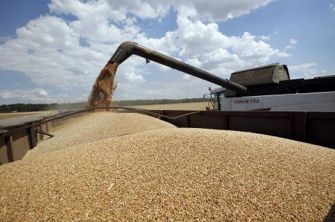 Экспортные цены на пшеницу выросли до рекордных в этом сезоне, цены в портах подскочили на 5%