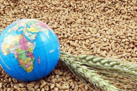 Bloomberg: Россия стала лидером на мировом рынке пшеницы