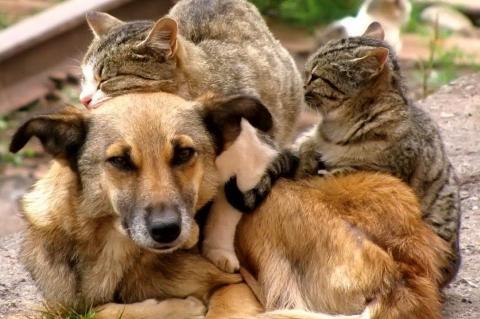 Бездомные кошки и собака
