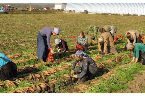 Ручной труд на селе