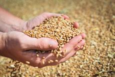 Цены на зерно ставят рекорды, а россияне боятся остаться без хлеба